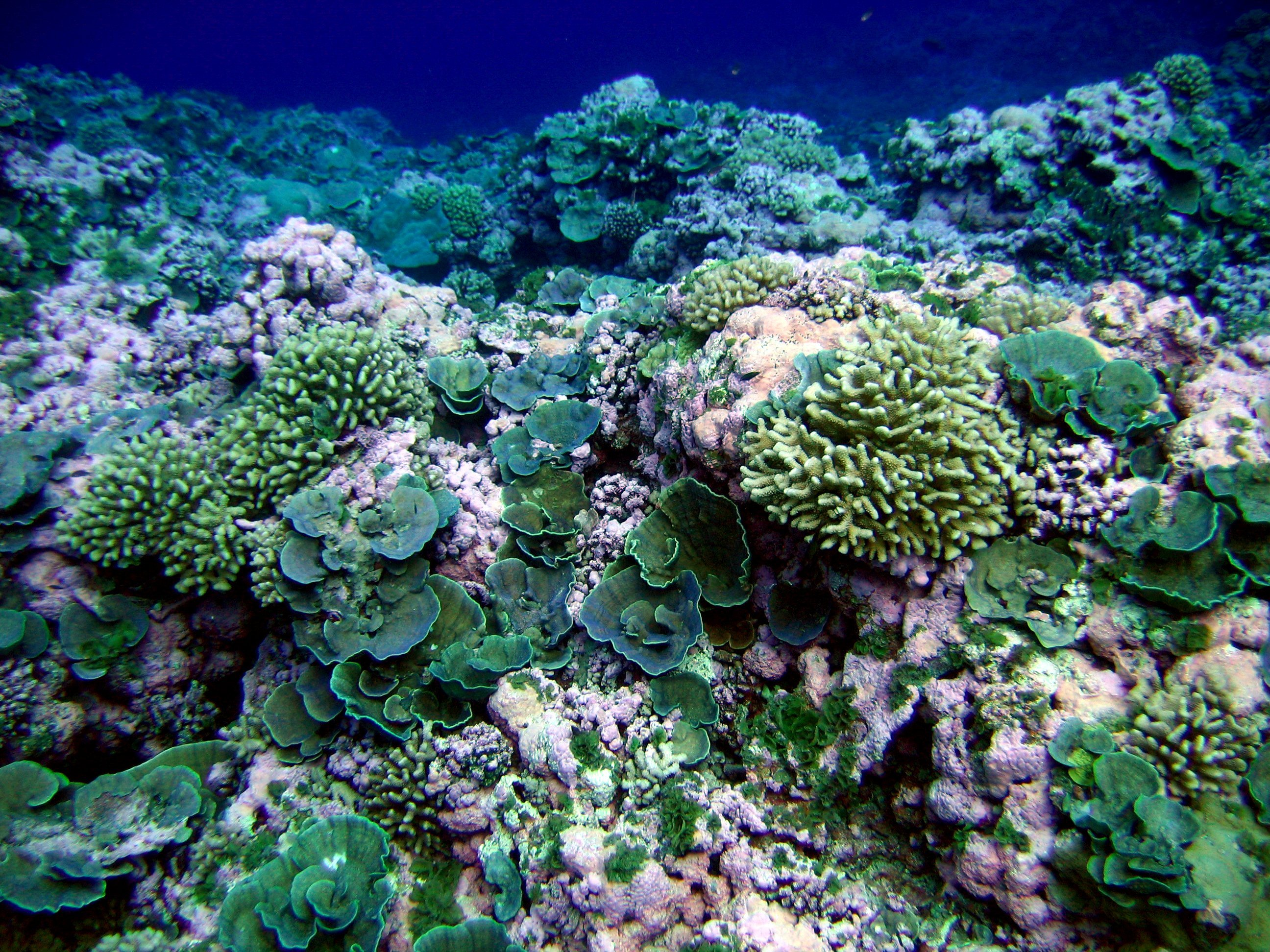 One ecosystem type studied by NASA's COral Reef Airborne Laboratory.
