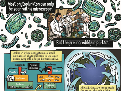 Phytoplankton and Climate