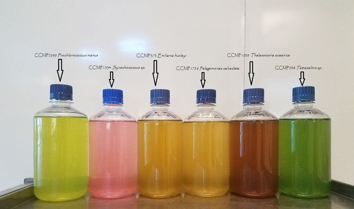 Jars of phytoplankton cultures show their unique coloration in a lineup at Bigelow Laboratory for Ocean Sciences in Boothbay Maine.