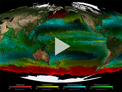 Global animation delineating the dominant type of phytoplankton in the ocean. Credit: The Darwin Project (MIT)
