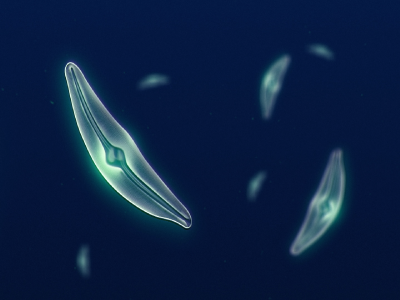 NASA study shows diatom populations (phytoplankton) have declined more than 1% per year from 1998 to 2012. Credit: NASA Scientific Visualization Studio