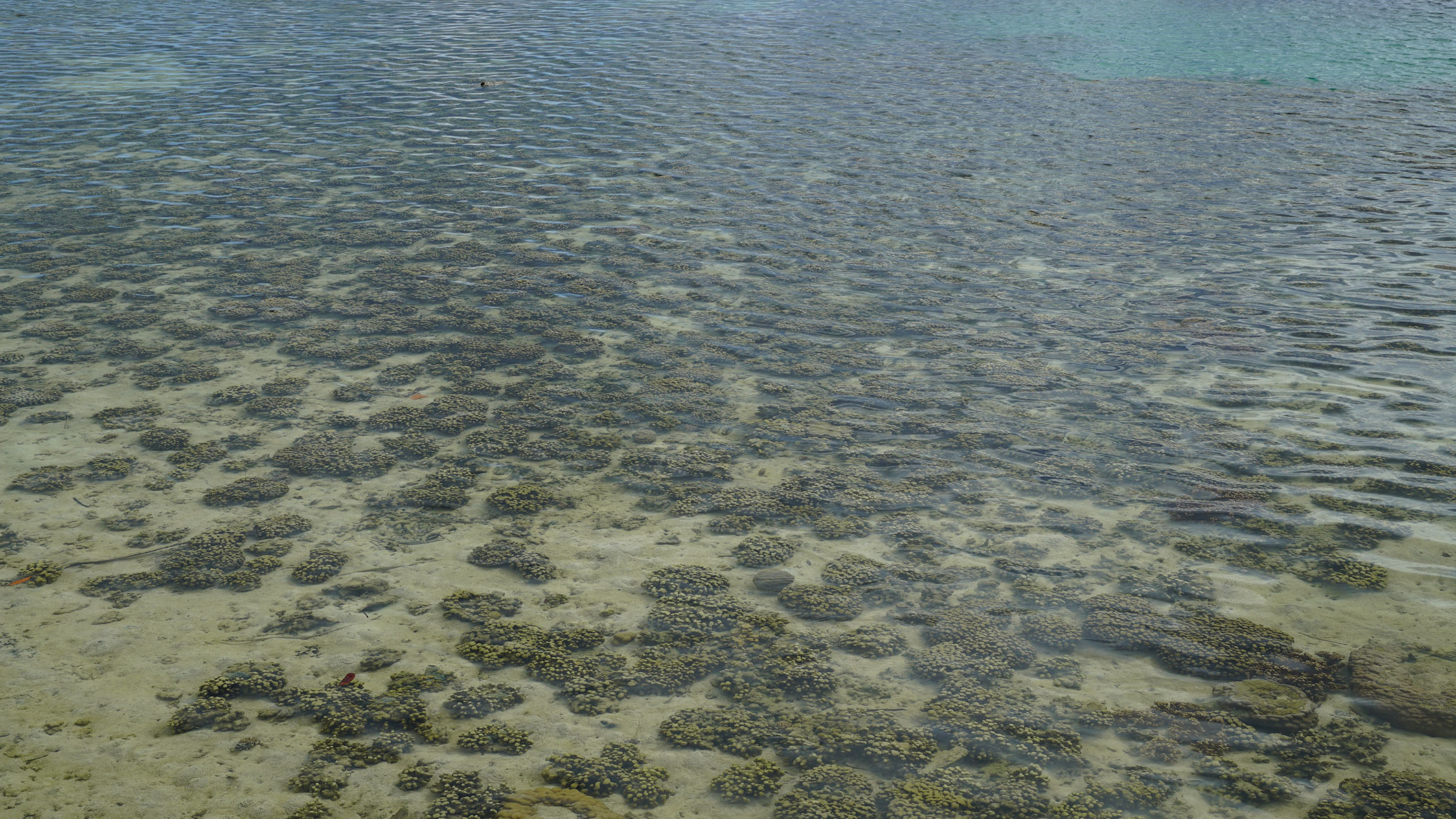 One of the Kaneohe Bay reefs studied by CORAL.