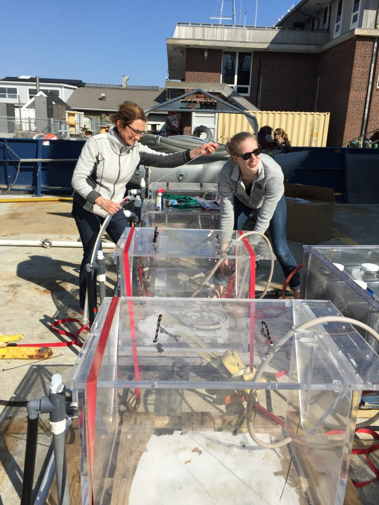 Françoise Morison (URI) and Caitlin Russell secure incubators used to measure phytoplankton growth rates.