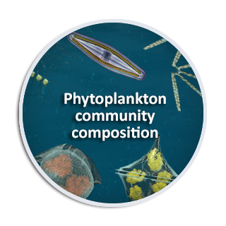 Phytoplankton community composition
