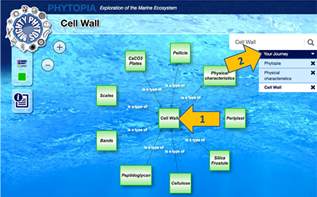 Phytopia interactive (cell wall types)
