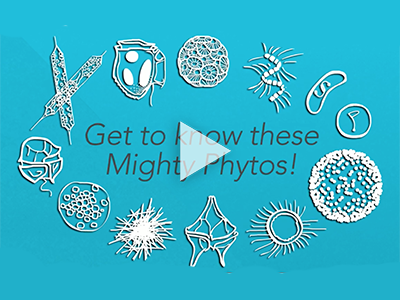 An introduction to phytoplankton and their important roles in Earth's ecosystem.
