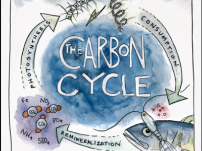 A carbon cycle diagram drawn by Artist at Sea Kirsten Carlson. Credit: Kirsten Carlson
