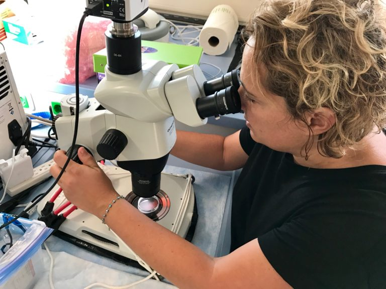 Zrinka Ljubesic (University of Zagreb) uses a microscope to identify phytoplankton and zooplankton in seawater samples.